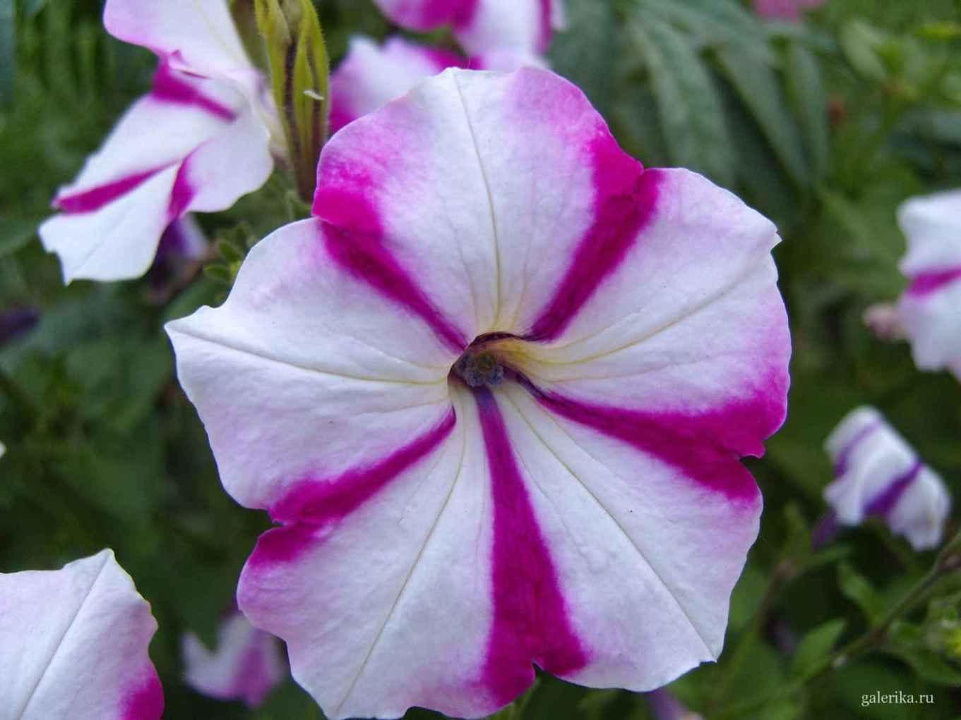 Фото цветов с названиями растущих на клумб