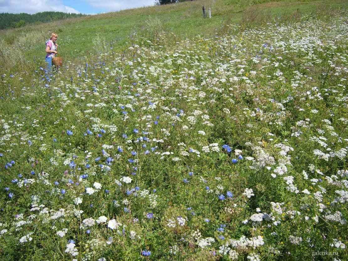 Фото поля с луговыми цветами